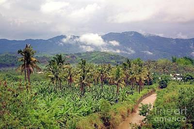 Photograph - Banana And Palm Trees In Southern Taiwan by Yali Shi