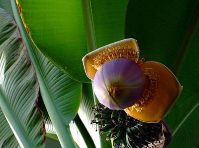 Banana Bloom Art Print by Mindy Newman