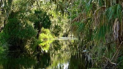 Photograph - Banana Creek Befor Irmageddon by Carol Bradley
