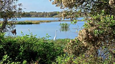 Photograph - Banana Creek Marsh In January by Carol Bradley