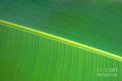 Banana Leaf Art Print by Dana Edmunds - Printscapes