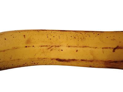 Photograph - Banana Shaft by Stan  Magnan