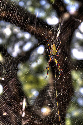 Golden Orb Photograph - Banana Spider by Dustin K Ryan