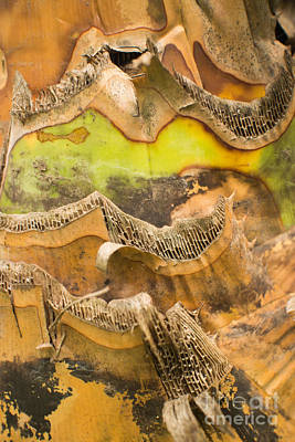 Photograph - Banana Tree Trunk by Jason Rosette