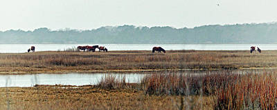 Photograph - Band Of Wild Horses Along Sinepuxent Bay by Assateague Pony Photography