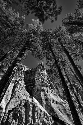 Photograph - Bandelier Cliffs And Trees #2 by Stuart Litoff
