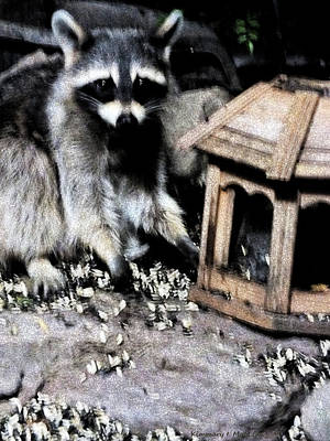 Digital Art - Bandit At The Bird Feeder by Kimmary I MacLean