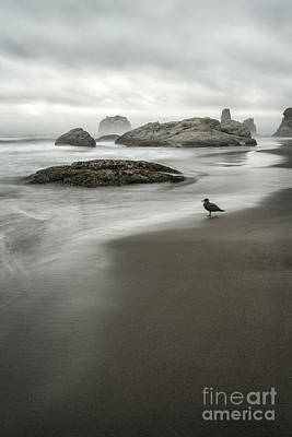 Photograph - Bandon Calm by Sonya Lang