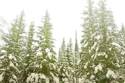 Photograph - Banff Canada Dreamy Pine Trees Woodland by Andrea Hazel Ihlefeld