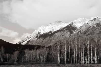 Photograph - Banff Canada Mountain Trees Landscape by Andrea Hazel Ihlefeld