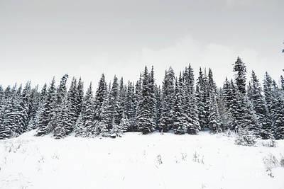 Photograph - Banff Canada Pine Tree Row by Andrea Hazel Ihlefeld