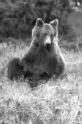 Photograph - Banff Sitting Grizzly Portrait Black And White by Adam Jewell