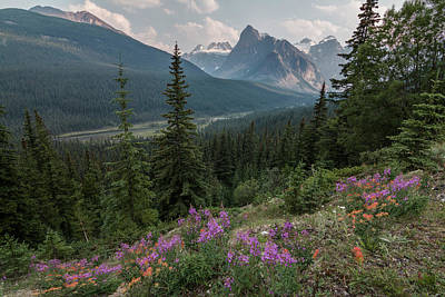 Photograph - Banff Wildflowers by Patti Deters