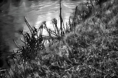 Photograph - Bank Of A Pond by Gina O'Brien