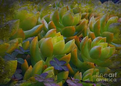 Photograph - Bank Of Succulents by Jenny Revitz Soper