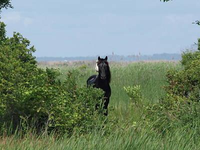 Banker Horse And Egret - Landscape Art Print