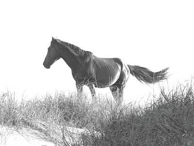 Banker Horse On Dune  1 Art Print