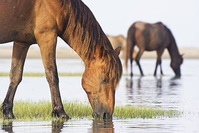 Banker Horses On Tidal Flat Art Print