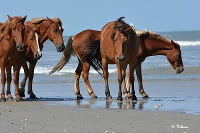 Photograph - Banker Ponies by Dan Williams