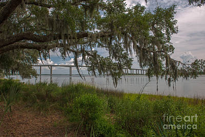 Photograph - Banks Of The Wando River by Dale Powell