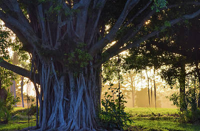Photograph - Banyan And Twilight Haze by William Tasker