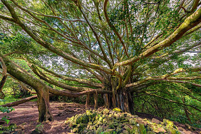 Photograph - Banyan by Chuck Jason