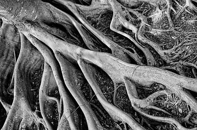 Photograph - Banyan Roots by Mick Burkey