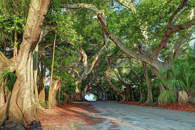 Photograph - Banyan Street 2 by Donna Kennedy