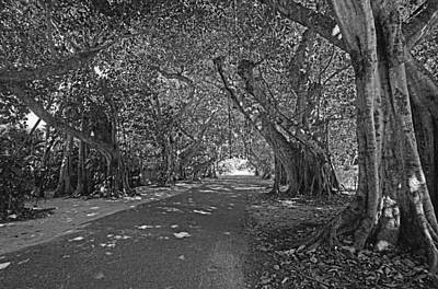 Photograph - Banyan Street 2 by HH Photography of Florida
