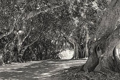 Photograph - Banyan Street 3 by HH Photography of Florida
