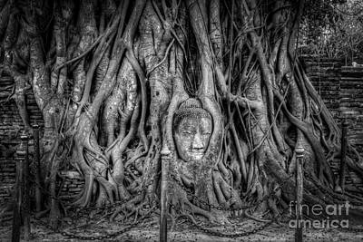 Wat Photograph - Banyan Tree by Adrian Evans
