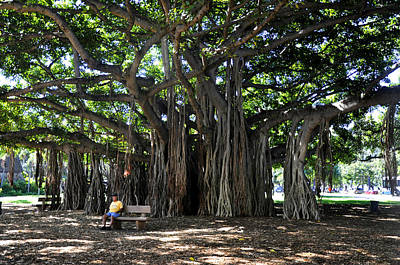Photograph - Banyan Tree by Andrew Dinh