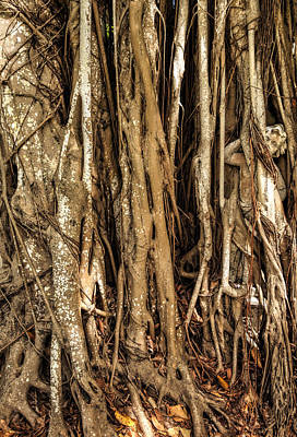 Photograph - Banyan Tree Boy by Mick Burkey