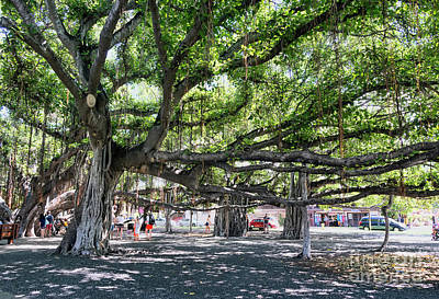 Photograph - Banyan Tree by Eddie Yerkish