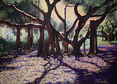 Banyan Tree On Old Cutler Road Print by Stephen Mack