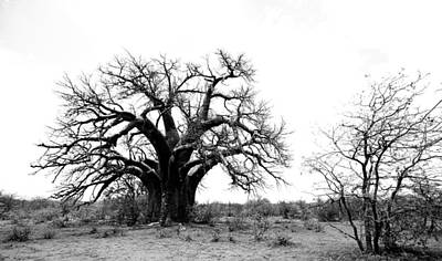 Baobab Landscape Art Print by Bruce J Robinson