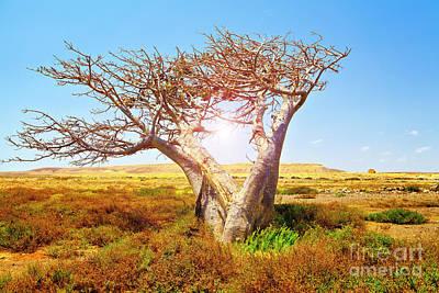 Baobab Photograph - Baobab by Sabino Parente