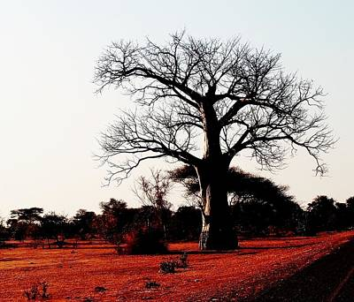 Photograph - Baobab Tree 01 by Dora Hathazi Mendes