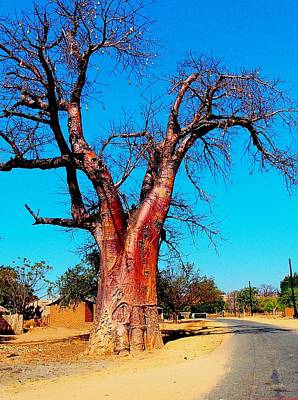 Photograph - Baobab Tree 02 by Dora Hathazi Mendes