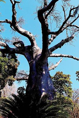 Photograph - Baobab Tree 03 by Dora Hathazi Mendes