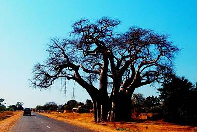 Photograph - Baobab Tree 04 by Dora Hathazi Mendes