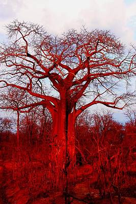 Photograph - Baobab Tree 05 by Dora Hathazi Mendes