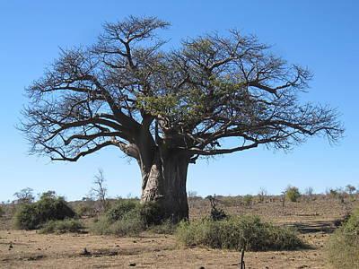 Wall Art - Photograph - Baobob Tree by Judith Hochroth