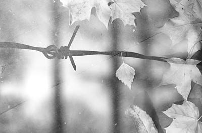 Photograph - Forbidden Autumn In Mono by John Williams