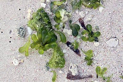 Photograph - Barbados Beach Life by PJ Boylan