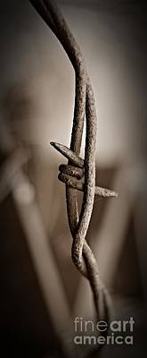 Photograph - Barbed Wire 3 Sepia by Chalet Roome-Rigdon
