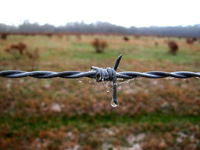 Photograph - Barbed Wire Fence 001 by Chris Mercer