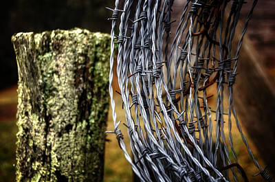 Photograph - Barbed Wire by Greg Mimbs