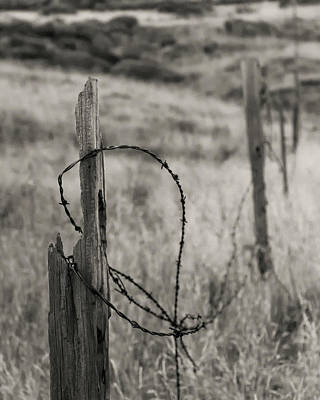Barbed Wire Art Print by Joseph Smith