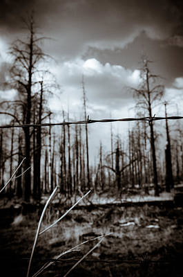 Photograph - Barbed Wire Protecting The Forest by Scott Sawyer